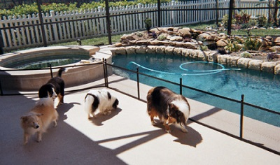 Life Saver mesh pool fence for pet safety